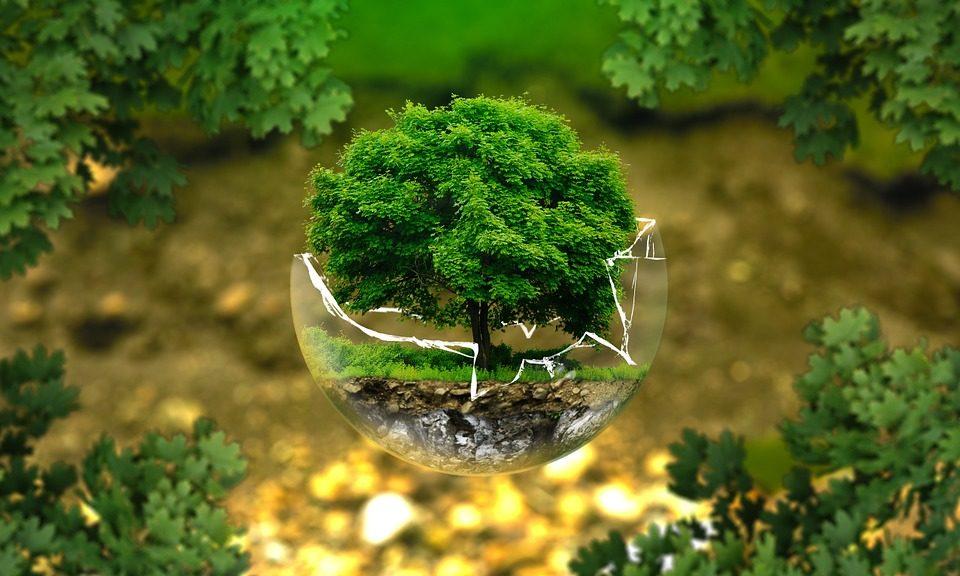 produkty ekologiczne