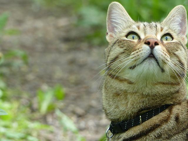 szelki dla kota