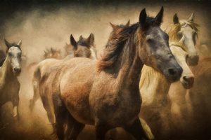 Obraz koń- reprodukcja