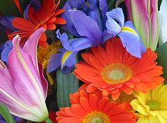 hurtownia florystyczna